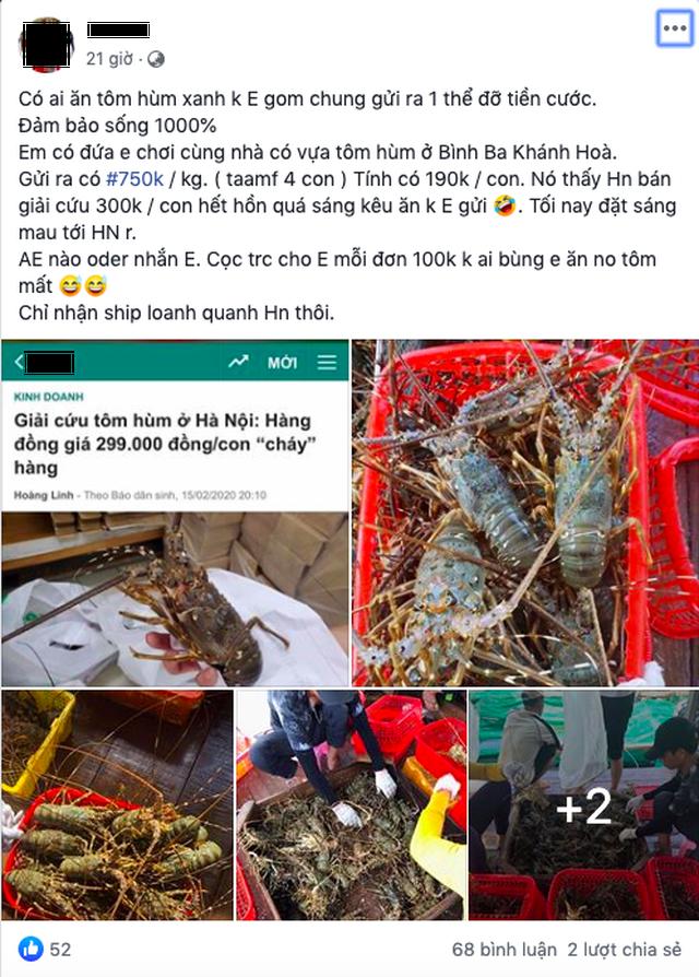 Buôn tôm hùm giải cứu giá 300 nghìn đồng/con vẫn lãi đậm - 4