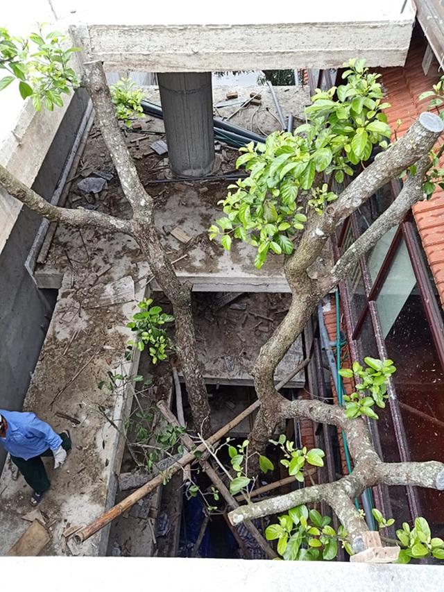 Chuỗi ngày không ngủ của ông chủ ngôi nhà gỗ 30 tỷ vừa tậu cặp cây khủng - 15