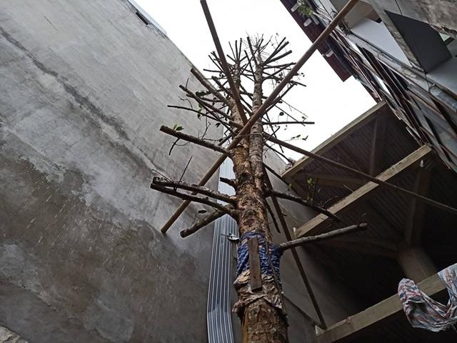 Chuỗi ngày không ngủ của ông chủ ngôi nhà gỗ 30 tỷ vừa tậu cặp cây khủng - 16