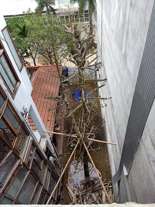 Chuỗi ngày không ngủ của ông chủ ngôi nhà gỗ 30 tỷ vừa tậu cặp cây khủng - 4