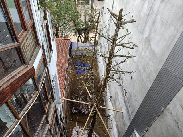 Chuỗi ngày không ngủ của ông chủ ngôi nhà gỗ 30 tỷ vừa tậu cặp cây khủng - 9