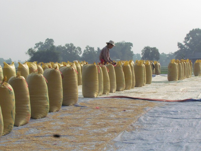 Vì sao Trung Quốc đột nhiên tăng mua gạo từ Việt Nam? - 2