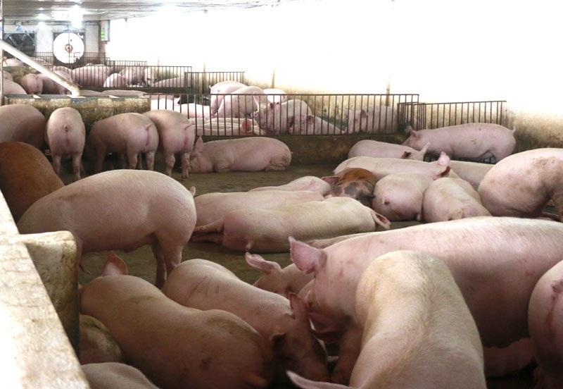 Tuyên bố giảm giá mà thịt lợn vẫn quá đắt, có 1 nhóm đang ăn lãi đậm