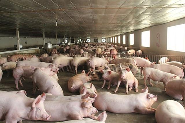 Hàng khan hiếm giảm nguồn về chợ, thịt lợn lại bật tăng mạnh - 1