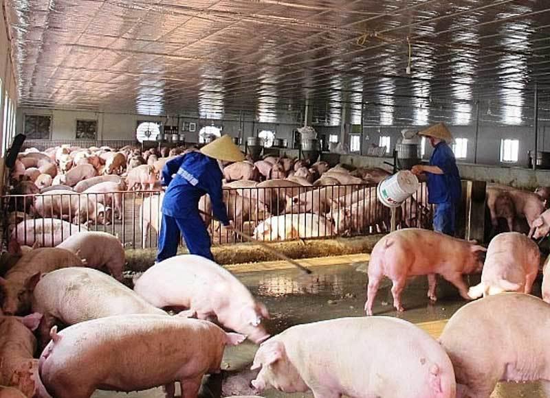 Tăng giá bất chấp cảnh báo, thịt lợn đắt đỏ chưa từng có