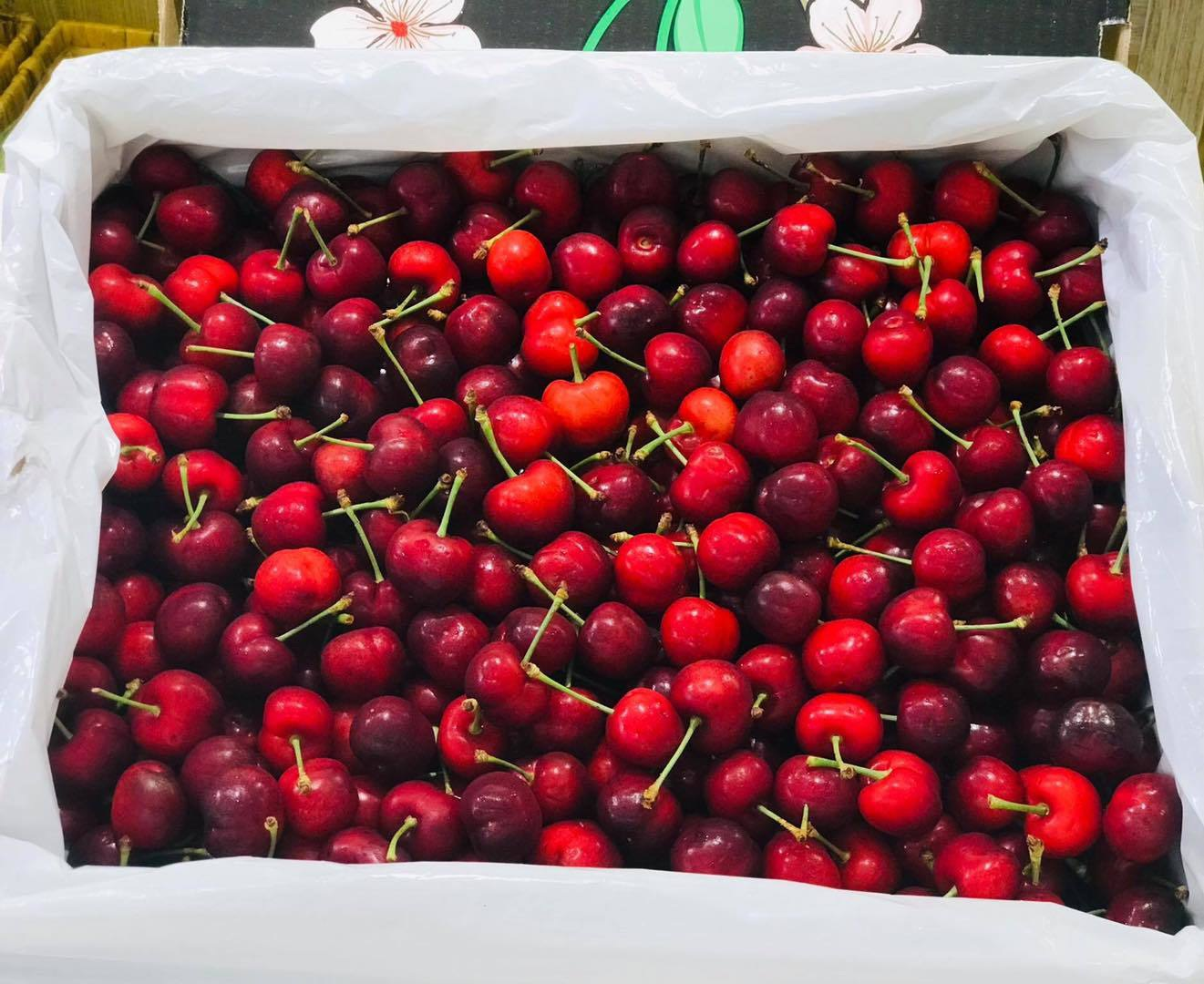 Hết thời giá rẻ, nhà giàu Việt ăn cherry Mỹ 1 triệu đồng/kg