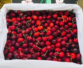 Cherry Mỹ hết thời rẻ mạt, giá bị