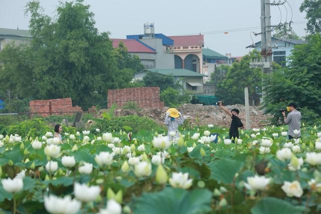 Hà Nội: Hoa sen xuống phố, thơm ngát cả vùng trời! - 8