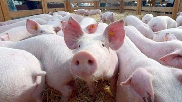 Giá thịt lợn bị thổi lên gần 300.000 đồng/kg, người dân sợ, tiểu thương khóc ròng - 2