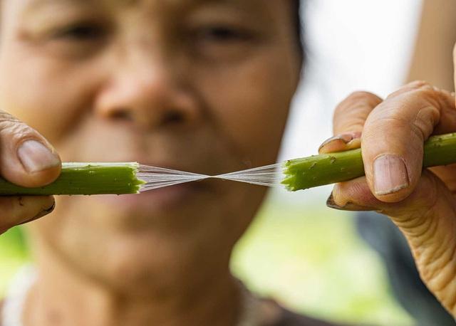 Người phụ nữ khiến sen nhả ra ngọc dệt thành khăn giá 10 triệu đồng/chiếc - 4