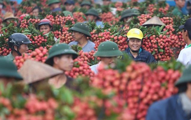 Hơn 300 người Trung Quốc được phép nhập cảnh vào Việt Nam mua vải thiều - 1
