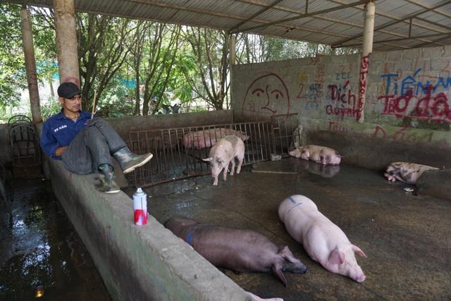 Chợ đầu mối lợn hơi ế ẩm, tiểu thương ngồi đuổi ruồi vì giá quá cao - 3