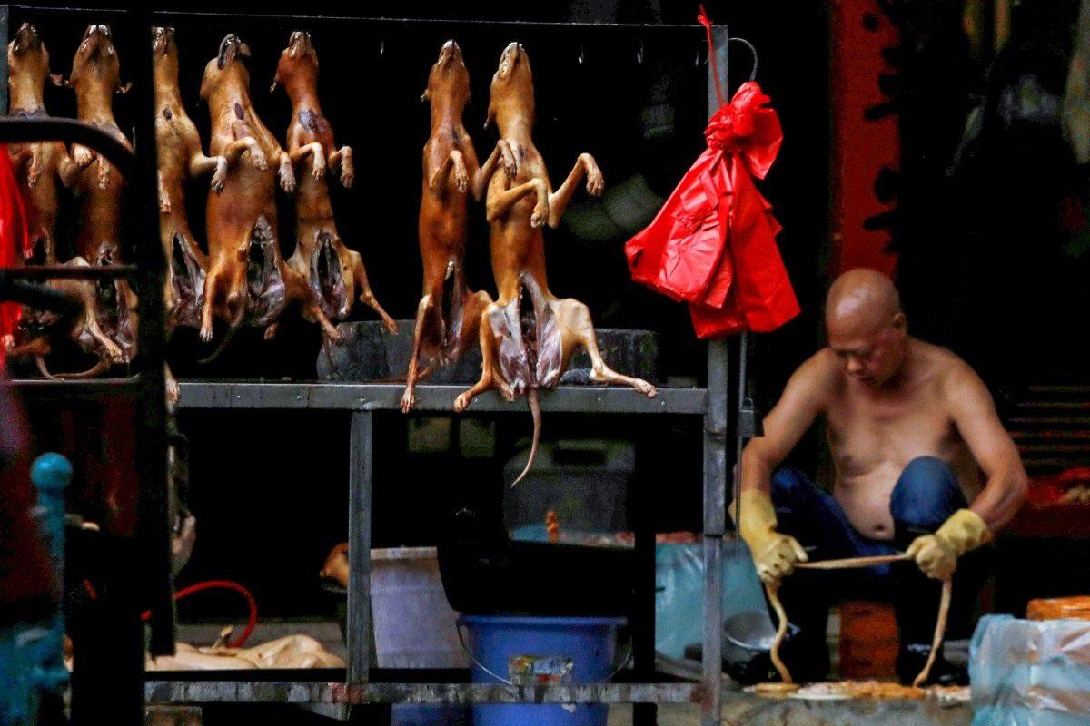 """Lễ hội thịt chó lớn nhất Trung Quốc chuẩn bị """"vào mùa"""""""