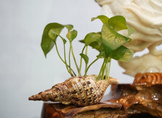 Chiêm ngưỡng bức Cửu Long Tranh Châu bằng vỏ sò nghìn năm tuổi - 12