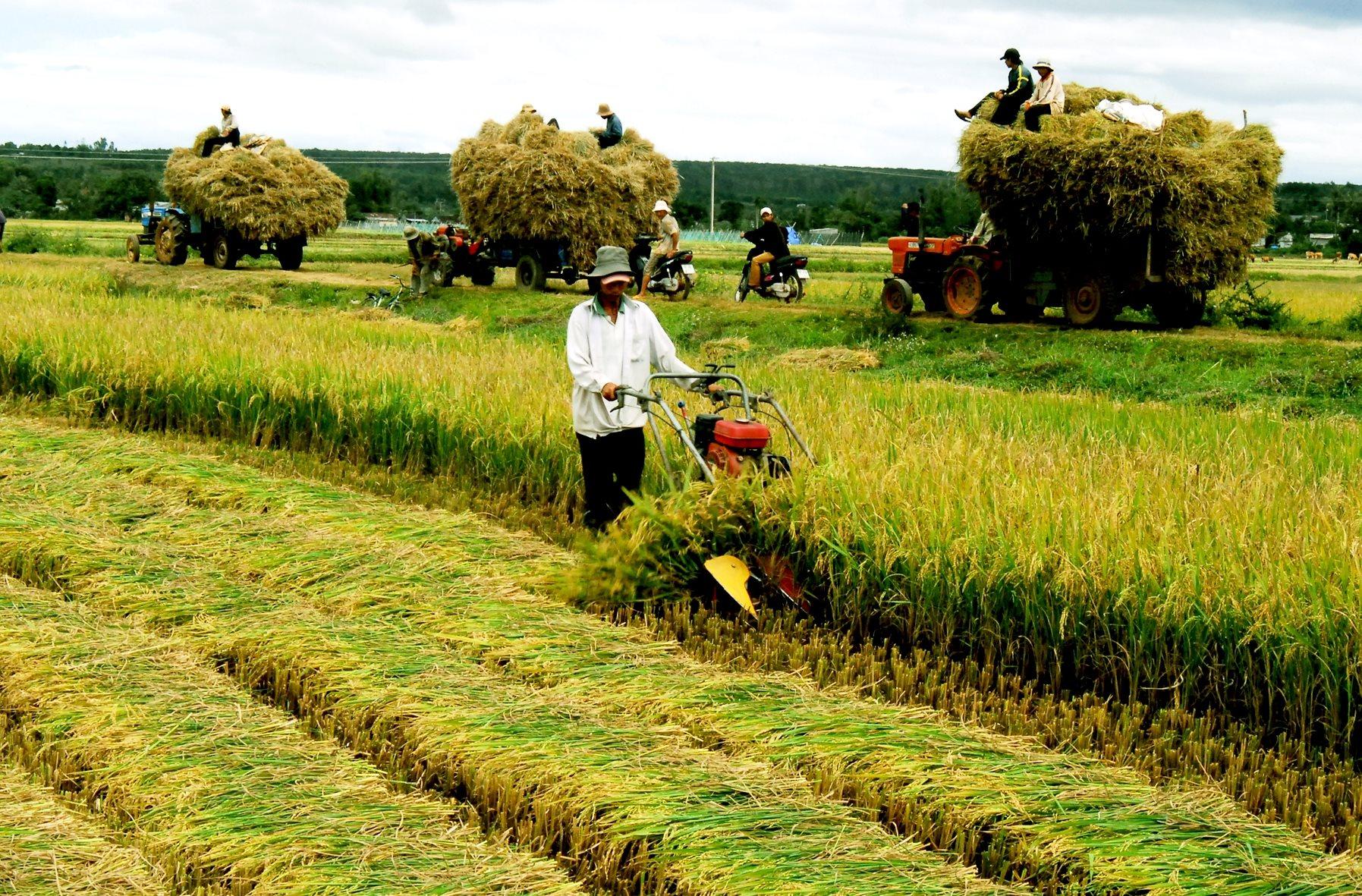 Tiến hành thu thập thông tin hoạt động của 1,4 triệu hộ nông dân trên cả nước