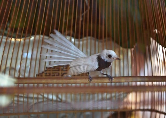Mê đắm nữ hoàng chim Việt, đại gia Singapore vung tiền tỷ không mua nổi  - 3