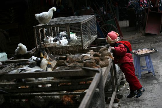 China Fresh Meat Lovers Lament Death of Live Poultry Markets