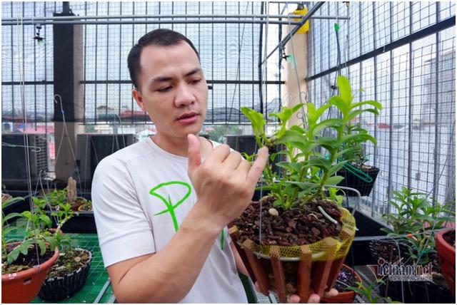 Tận mắt 4 mầm lan như cọng rau rao tiền tỷ của 2 đại gia Hà Thành - 1