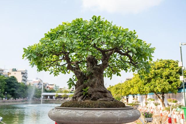 Mục sở thị vườn cây cảnh thu nhỏ có giá hàng tỷ đồng giữa lòng Thủ đô - 1