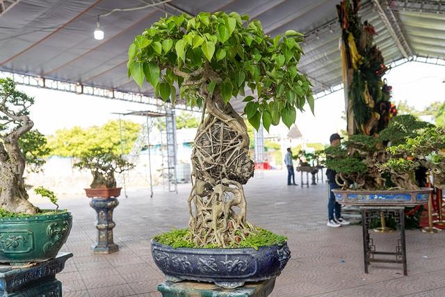 Mục sở thị vườn cây cảnh thu nhỏ có giá hàng tỷ đồng giữa lòng Thủ đô - 2