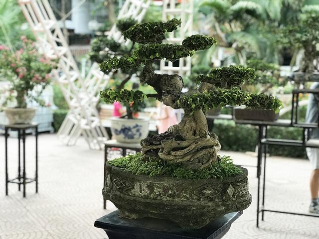 Mục sở thị vườn cây cảnh thu nhỏ có giá hàng tỷ đồng giữa lòng Thủ đô - 8