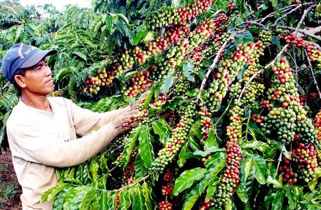 """EVFTA có hiệu lực: Cẩn thận với hàng hóa """"trà trộn"""" từ các nước láng giềng - 3"""