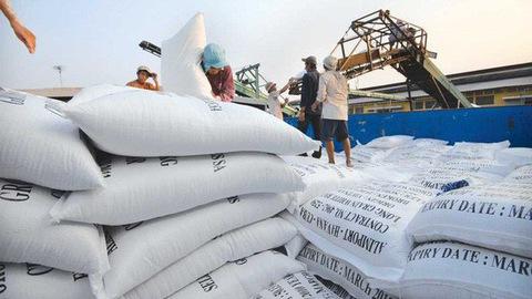 Giá gạo xuất khẩu của Việt Nam vượt cả Thái Lan