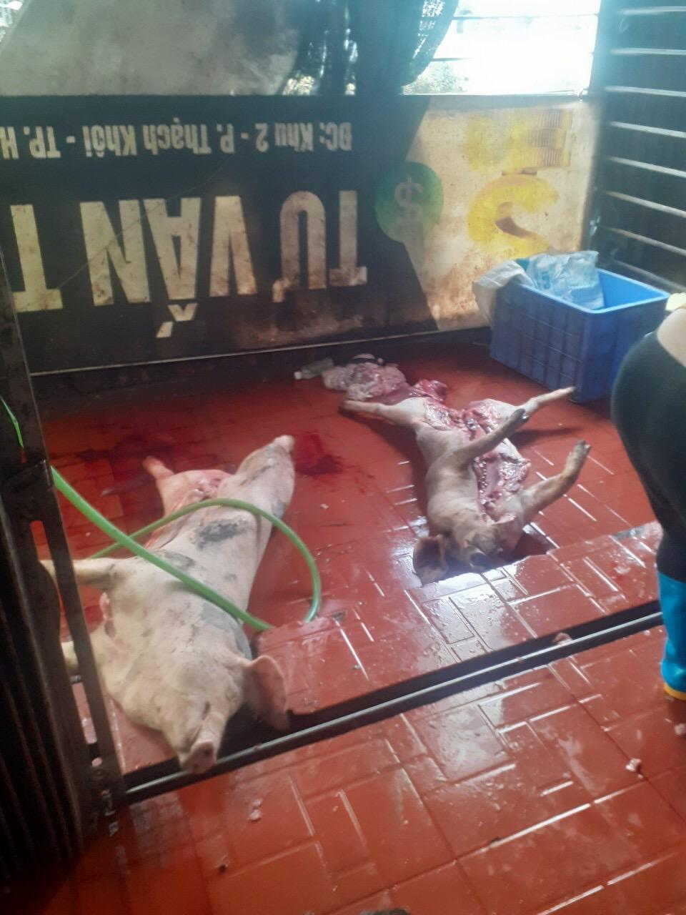 Chặn đứng hàng tấn thịt lợn biến chất, bốc mùi đang đưa vào cơ sở giết mổ trái phép