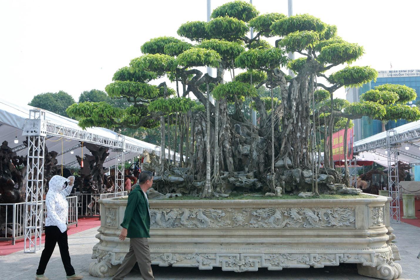 """Ngắm dàn """"siêu cây"""" hàng triệu USD của đại gia xứ Thanh"""