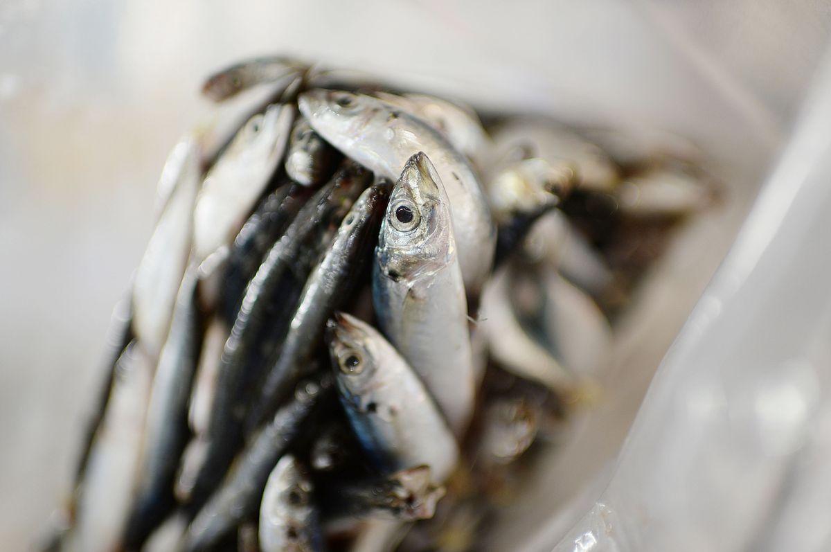 Trung Quốc cấm nhập khẩu hải sản từ Indonesia vì dương tính với virus corona