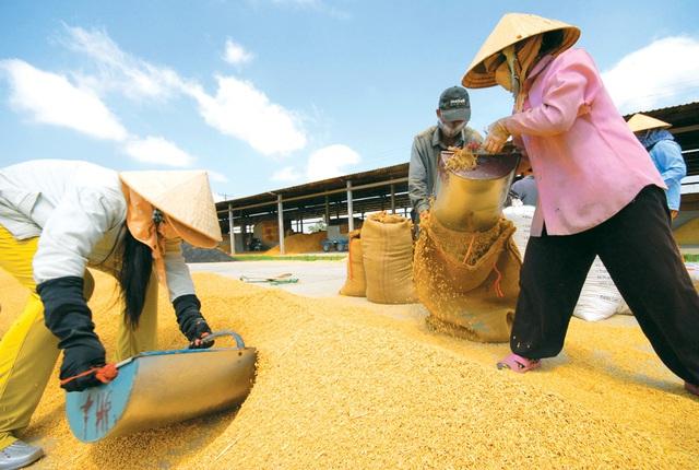 """Xuất khẩu gạo đánh mất """"cơ hội vàng"""", doanh nghiệp tiếp tục khó khăn - 3"""
