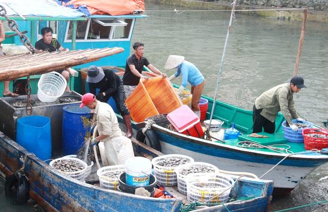 Sự thật về clip ngư dân đổ ngao hai cùi xuống biển do bị ép giá thê thảm - 1
