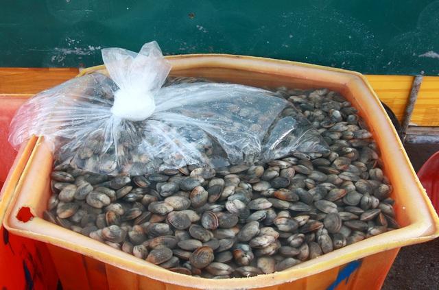 Sự thật về clip ngư dân đổ ngao hai cùi xuống biển do bị ép giá thê thảm - 2