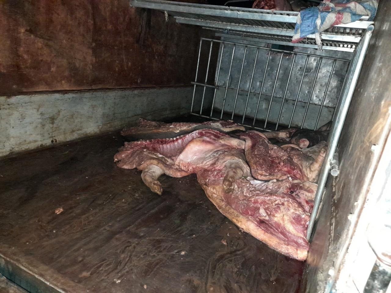 Bắt vụ vận chuyển cả tấn lợn mắc dịch tả lợn châu Phi đi tiêu thụ