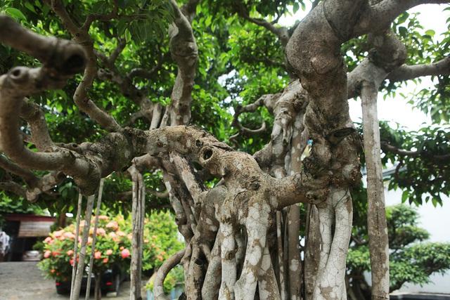 """Sanh cổ """"Ngũ long tranh châu"""" mua từ năm 1996 với giá 100 cây vàng - 6"""