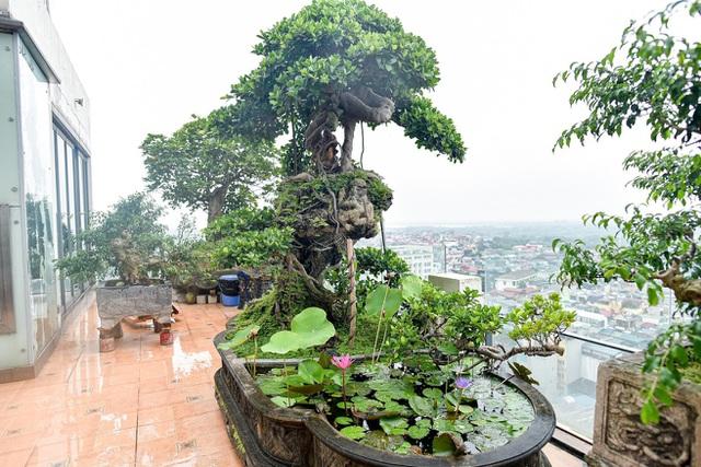 Lộ diện cây si Thạch Sanh có giá hàng tỷ đồng khiến đại gia mê mẩn - 4