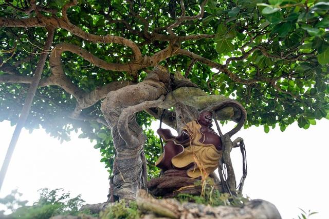 Lộ diện cây si Thạch Sanh có giá hàng tỷ đồng khiến đại gia mê mẩn - 10