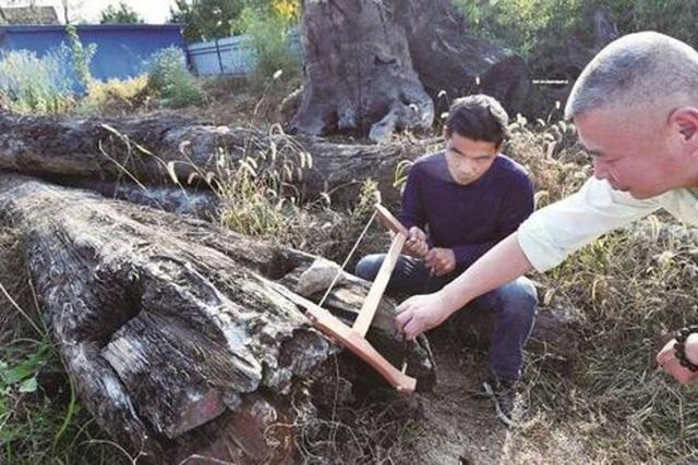 Khúc gỗ bỏ xó trong vườn, ngỡ ngàng khi biết giá trị thật - 5