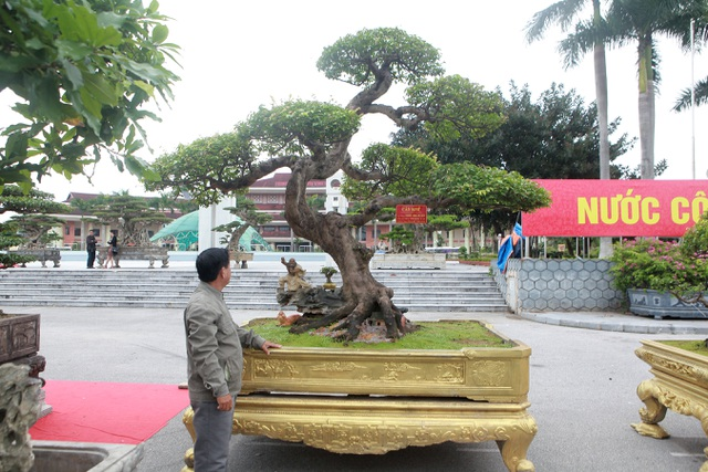 Sửng sốt với cây khế cổ dáng Long đẹp nhất Việt Nam có giá 5 tỷ đồng - 1