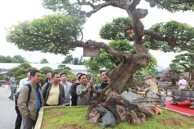 Sửng sốt với cây khế cổ dáng Long đẹp nhất Việt Nam có giá 5 tỷ đồng - 4