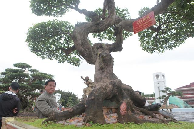 Sửng sốt với cây khế cổ dáng Long đẹp nhất Việt Nam có giá 5 tỷ đồng - 6