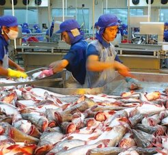 Xuất khẩu tôm tăng mạnh nhờ EVFTA