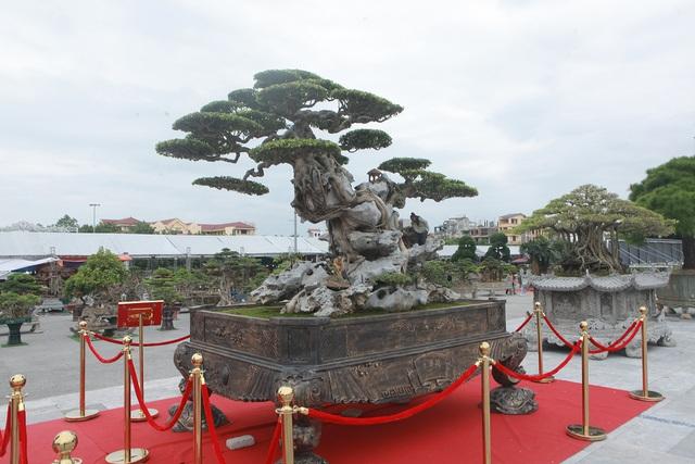 Ngỡ ngàng với huyền thoại sanh cổ ký đá kỳ vĩ nhất Việt Nam - 7