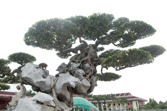 Ngỡ ngàng với huyền thoại sanh cổ ký đá kỳ vĩ nhất Việt Nam - 9