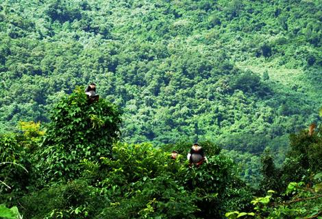 Hơn 1.300 ha rừng bị thiệt hại trong 10 tháng qua