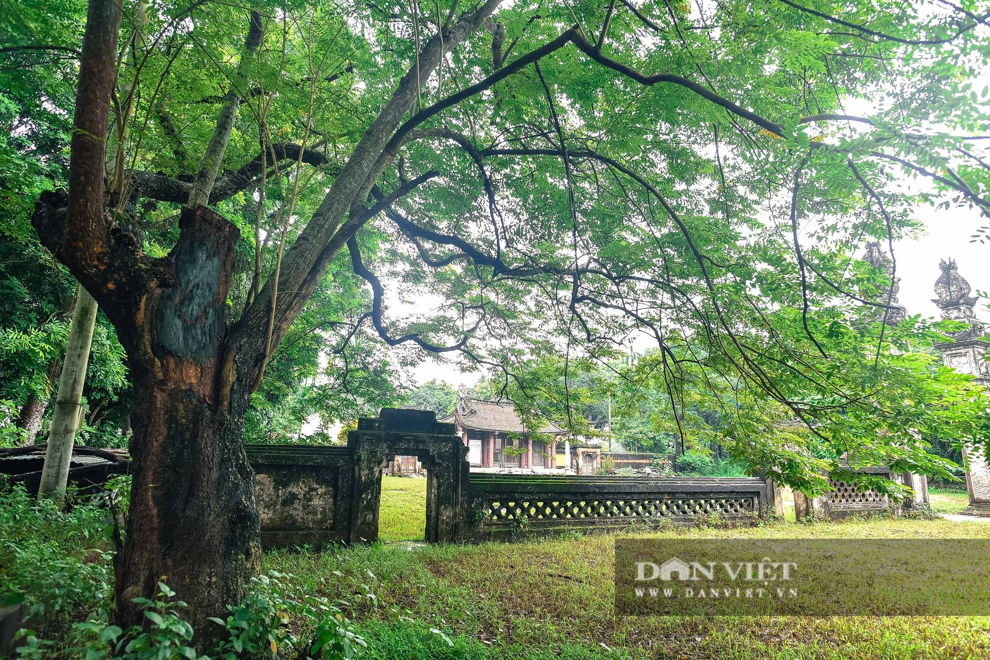 Chiêm ngưỡng cây sưa trăm tuổi ở Hà Nội, trả 60 tỷ đồng không bán