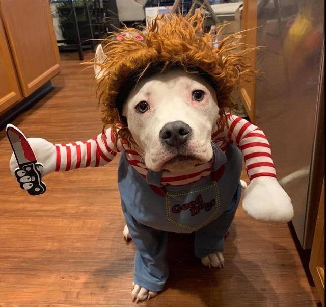 Chủ nhân rút hầu bao, chi đậm sắm đồ Halloween cho thú cưng - 1