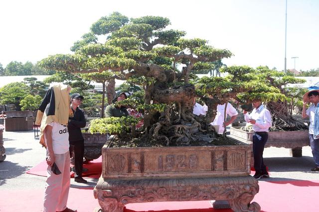 """""""Siêu cây"""" của nông dân Thái Bình được trả 10 tỷ đồng vẫn lắc đầu không bán - 4"""