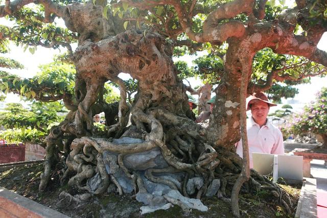"""""""Siêu cây"""" của nông dân Thái Bình được trả 10 tỷ đồng vẫn lắc đầu không bán - 8"""