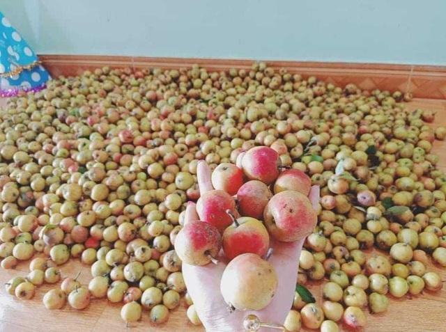 Bán quả rừng ngâm rượu Tết, quý cô công sở bỏ túi chục triệu đồng/tháng - 2